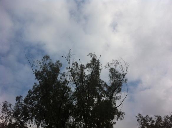 spot the parrots
