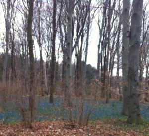 bluebell berlin1