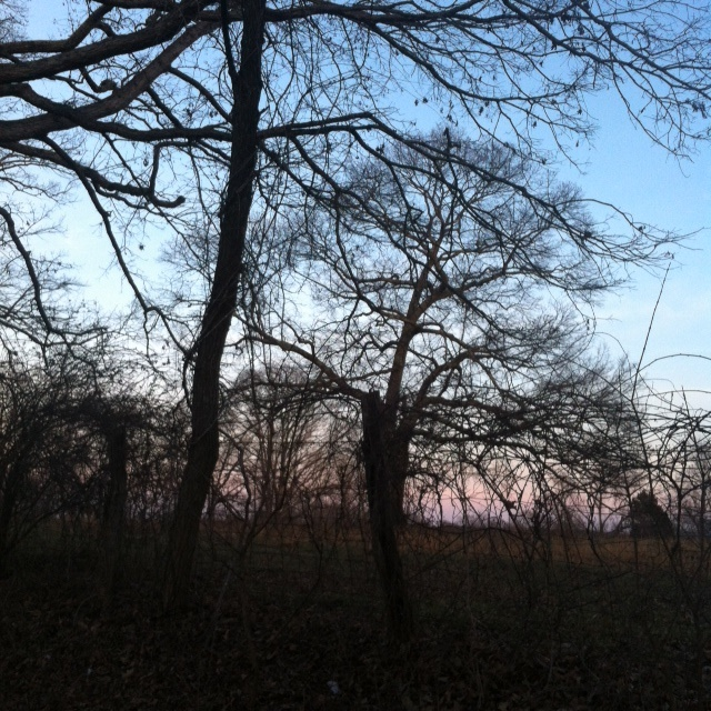dawn VA