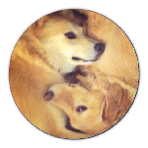 dog love pud and angie