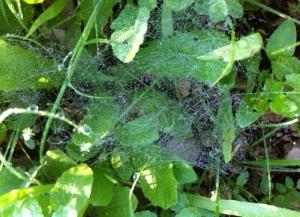 fairy web 2