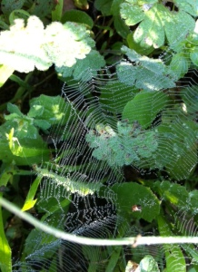 fairy web 3