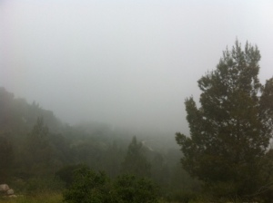 forest in mist 1
