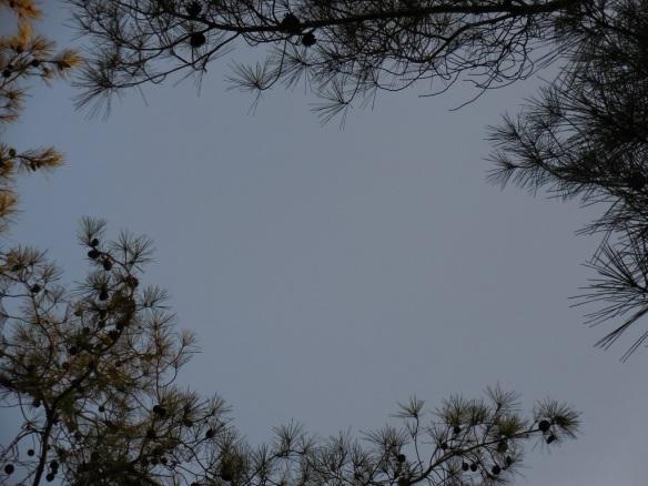 frame of leaves 1