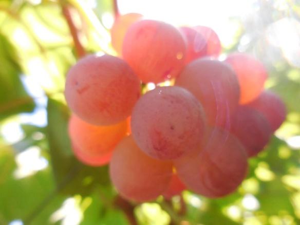 grapes A