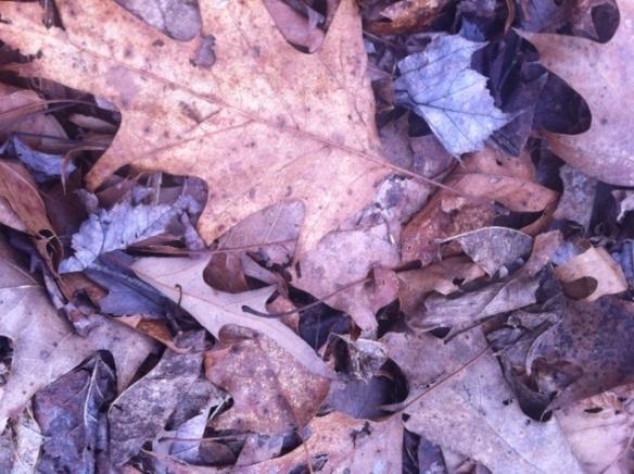 leaf VCCA