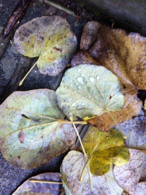 leaf winter 2