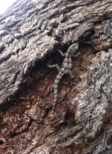 lizard in tree