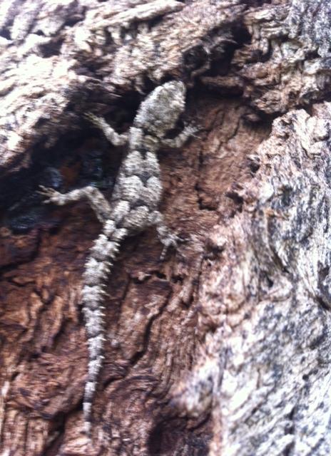 lizard tree 2