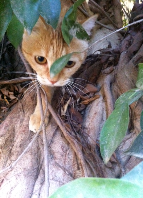 lucy tree jungle