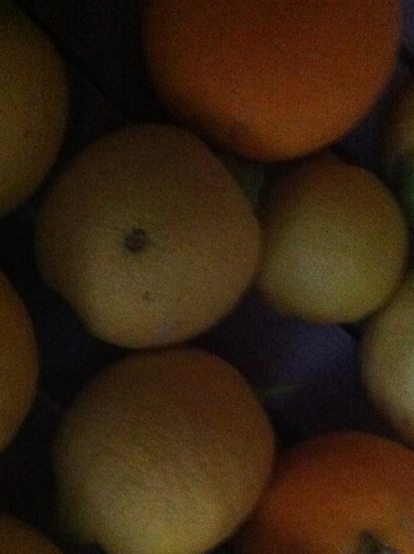 oranges and lemons closeup