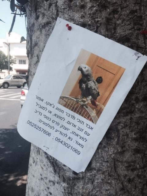 parrot in tel aviv 3.jpg