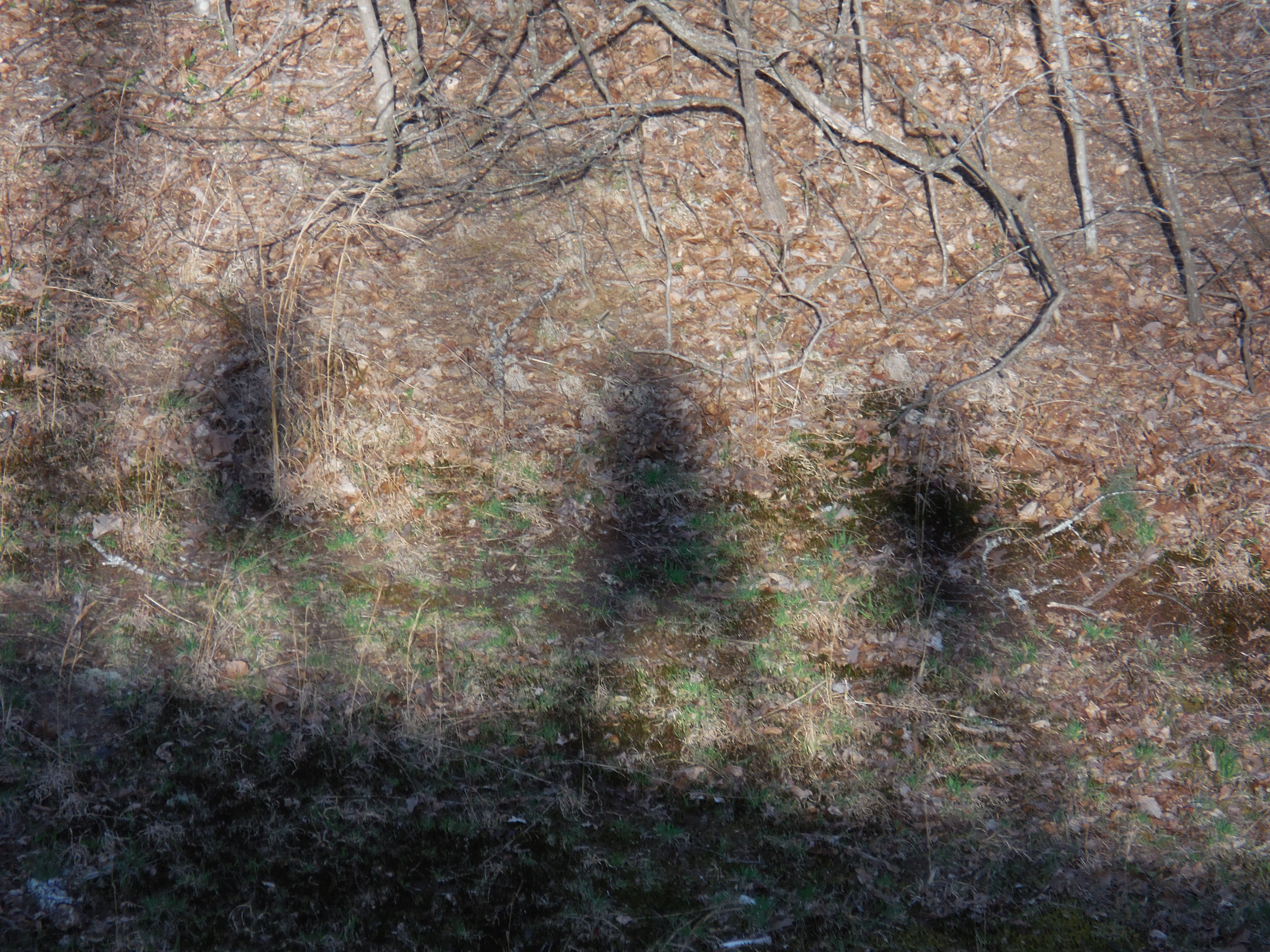 shadows sweet briar three ladies