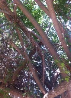 tree Ella 1