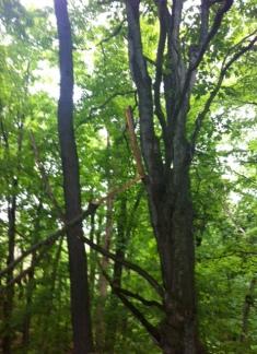 Vermont trees1