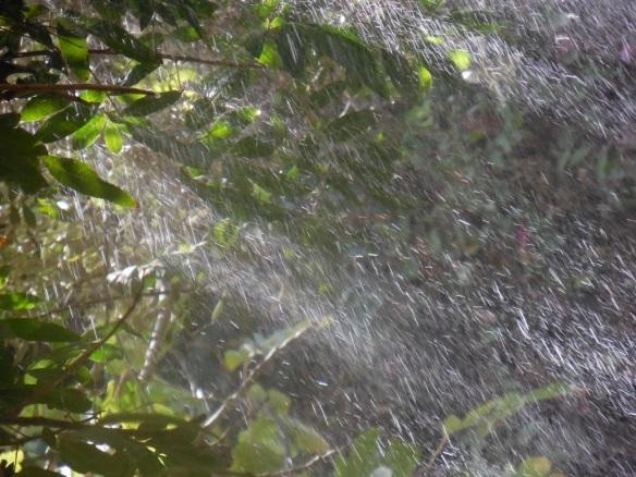 water-garden-2