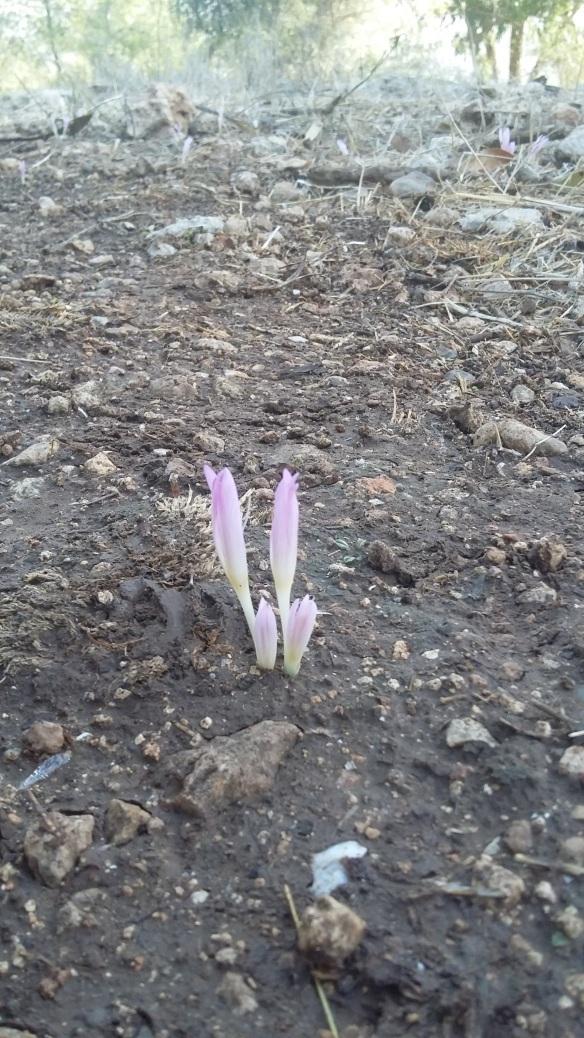 winter-buds-1