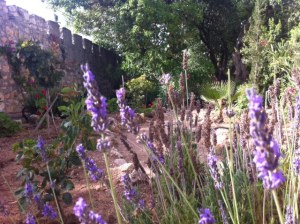zion sisters lavender and wall