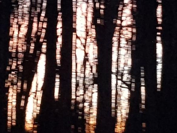 Tree Glint